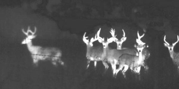 FLIR-Scout-Deer